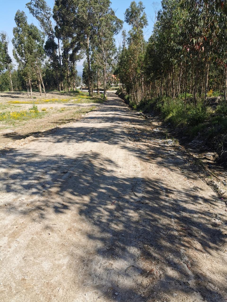 Estrada florestal